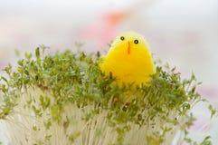 Het Gele Kuiken van het stuk speelgoed voor Pasen op Witte waterkers Stock Foto