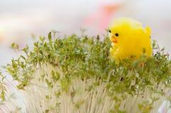 Het Gele Kuiken van het stuk speelgoed voor Pasen op Witte waterkers Stock Afbeelding