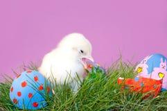 Het gele Kuiken van Pasen met zijn open bek Royalty-vrije Stock Foto's