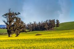 Het gele landschap van Sonoma stock afbeelding