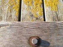 Het gele mos en de schroef Royalty-vrije Stock Afbeelding