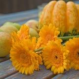 Het gele oogst nog-leven stock afbeelding