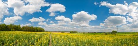 Het gele panorama van het bloemgebied Stock Afbeeldingen