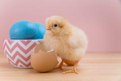 Het gele pluizige Pasen-kuiken bekijkt camera met eishell stock foto's