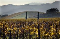 Het gele Uitzicht Napa Californië van Wijngaarden Royalty-vrije Stock Afbeeldingen