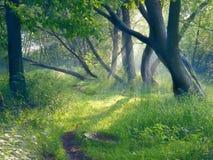 Het gelijk maken in bos Royalty-vrije Stock Afbeelding