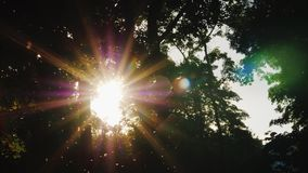Het gelijk maken in het bos - de zon glanst door de takken van bomen, de mugvliegen in de voorgrond stock videobeelden