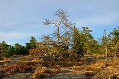 Het gelijk maken in het bos Royalty-vrije Stock Fotografie