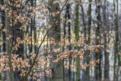 Het gelijk maken van bosdetail stock foto's