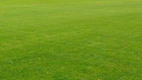 Het gelijke groene goed-verzorgde gazon wordt nauwkeurig gesneden royalty-vrije stock afbeeldingen