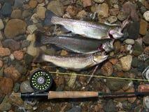 Het Geluk van de visser stock fotografie