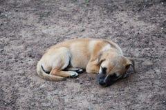 Het geluk van honden royalty-vrije stock fotografie