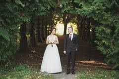 Het gelukkige de bruid en de bruidegom stellen van het huwelijkspaar in een botanisch park stock afbeeldingen