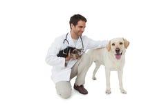Het gelukkige dierenarts stellen met de terriër van Yorkshire en geel Labrador Stock Fotografie