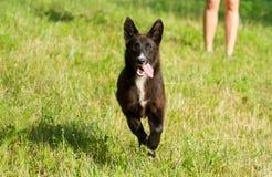 Het gelukkige hond lopen Royalty-vrije Stock Foto's