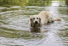 Het gelukkige hond spelen in water Royalty-vrije Stock Fotografie