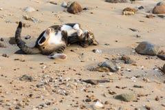 Het gelukkige huisdierenkat spelen op een zandig strand Stock Foto
