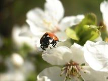 Het gelukkige insect van het onzelieveheersbeestje Royalty-vrije Stock Fotografie