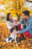 Het gelukkige jonge paar spelen met honden in openlucht Royalty-vrije Stock Foto