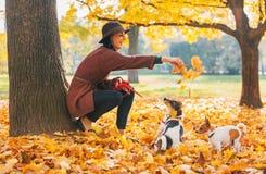 Het gelukkige jonge vrouw spelen met honden in openlucht Stock Foto