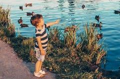 Het gelukkige kind, weinig jongen bekijkt de eenden in het meer en de holding in handen in openlucht de groei Gestemd Retro De zo stock fotografie