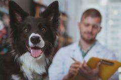 Het gelukkige knappe mannelijke dierenarts genieten die met zijn hondpati?nt werken royalty-vrije stock fotografie