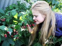 Het gelukkige meisje eet rijpe frambozen in tuin Stock Foto