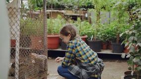 Het gelukkige meisje let op gekooide konijnen in serre, wat betreft hen en spreekt aan grappige dieren Groene installaties en stock video