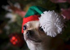 Het gelukkige puppy van Nieuwjaar 2018 chihuahua in de sneeuw van hoedenkerstmis Stock Afbeeldingen