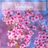 Het gelukkige Valentijnskaartendag van letters voorzien met Sakura-bloemachtergrond Stock Fotografie