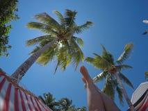 Het genieten van van vakantie in de hangmat, de palmen en het zonnige weer Stock Fotografie