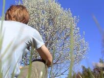 Het genieten van van boom Stock Foto