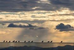 Het genieten van van zonsondergang Royalty-vrije Stock Foto