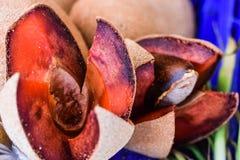 Het geopende fruit van Mamey Sapote op markt royalty-vrije stock foto's