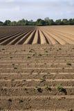 Het geploegde Gebied van het Landbouwbedrijf stock foto's
