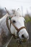 Het geschotene portret van het paardhoofd stock foto