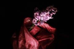 Hyacint Stock Fotografie