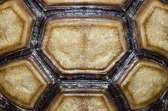 Het gesloten omhoog beeld van de schildpad Schild. Stock Foto's