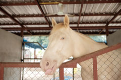 Het gestagneerde paard in stal voelt ongelukkig en geen vrijheid Royalty-vrije Stock Afbeeldingen