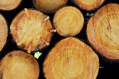 Het gestapelde hout opent het hout het programma Stock Afbeeldingen