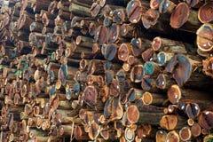 Het gestapelde Timmerhout van de Californische sequoia Stock Afbeelding