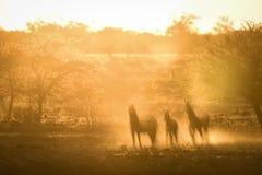 Het gestreepte lopen in oranje stof hoog sleutel Horizontaal beeld stock afbeelding