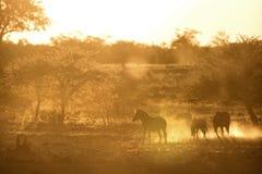 Het gestreepte lopen in oranje stof hoog sleutel Horizontaal beeld Vaag door stof royalty-vrije stock fotografie