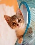 Het gestreepte verraste katje ziet eruit Stock Foto