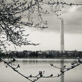 Het getijbekken van Washington Monument Reflecting In The royalty-vrije stock foto