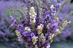 Het geurige Lavendelboeket in witte en purpere bloemen klaar voor hangt het drogen Royalty-vrije Stock Afbeeldingen