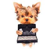 Het geval van de puppyholding met geld Stock Afbeelding