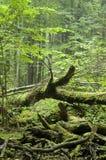 Het gevallen boom leggen Royalty-vrije Stock Foto's
