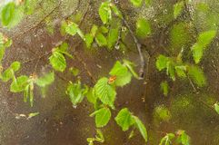 Het gevallen die blad aan het venster wordt geplakt dat van regen nat wordt daalt Comfortabel venster met de lente nieuwe bladere royalty-vrije stock foto