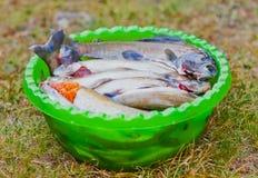 Het gevangen grayling in kom cooking Stock Foto